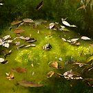 Autumn Frog 3 by ser-y-star
