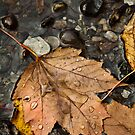 Leaf Study - Fall by Stephen Rowsell