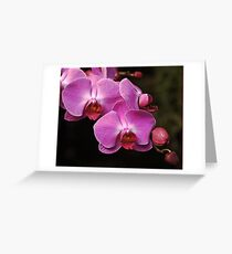 New Orchid Cascade   Greeting Card