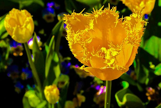 Unusual Tulip by ronsphotos