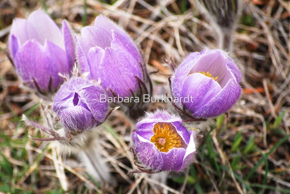 Wild Flowers of Nth America by Barbara Burkhardt