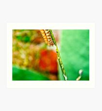 The Hungry Little Caterpillar.. Art Print