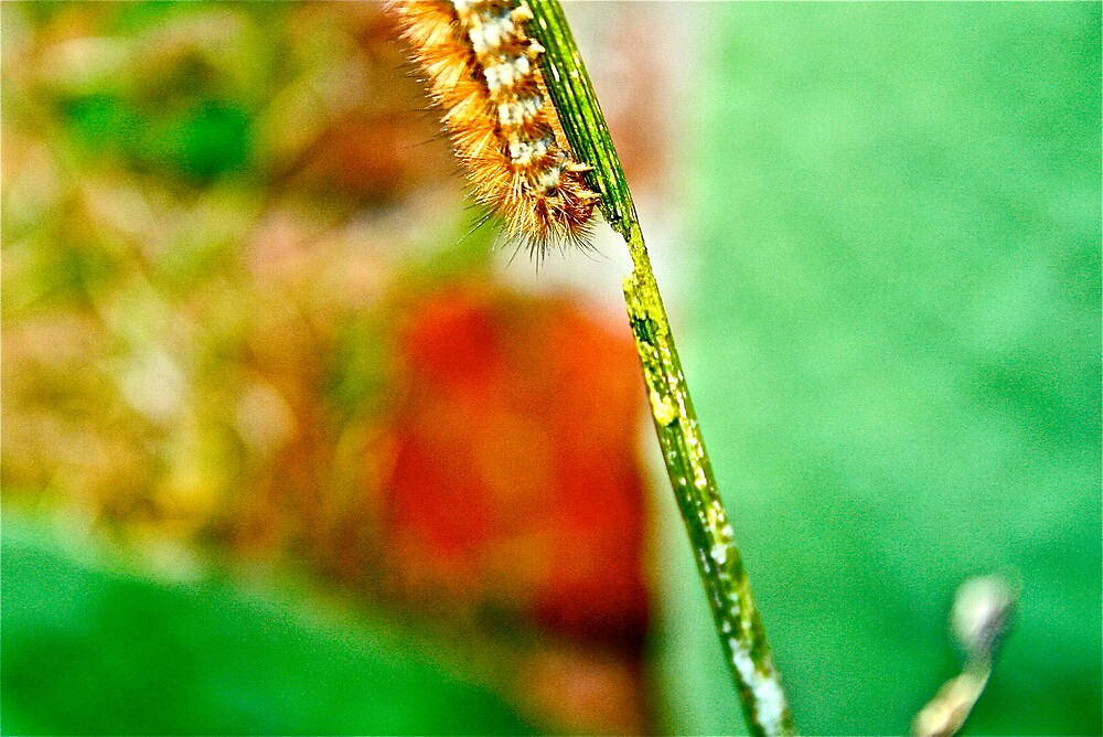 The Hungry Little Caterpillar.. by KayleeWalter
