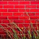 red brick by steen