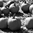 Pumpkin Henge by SilverLilyMoon