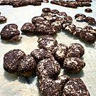 """Stromatolites in Hamelin Pool II"" Shark Bay, Western Australia by wildimagenation"