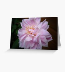 Pale Pink Rose   Macro  Greeting Card