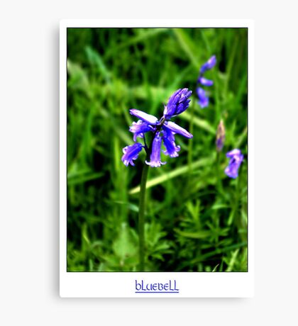 Bluebell #2 Canvas Print