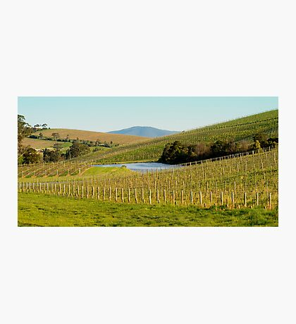Wine Country - Yarra Valley Photographic Print