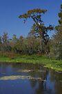 Egret in the Tree by Allen Lucas