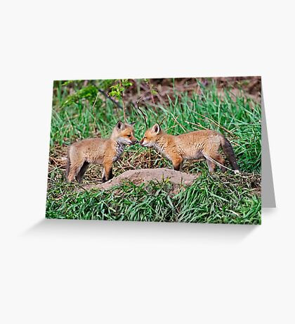Fox Kits 11 Greeting Card