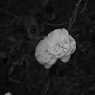White on Black by Sean Farragher