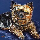 Yorkshire Terrier by Susan  Bergstrom