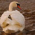 Swan 3 by Alexa Pereira