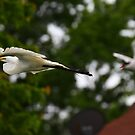 Chased Off by a Tern by fototakerTony
