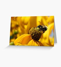 Bee And Yellow Daisy Greeting Card