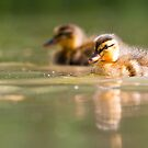 Two Little Ducks by Peter Denness