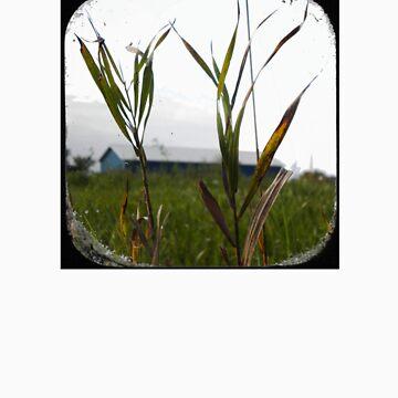 blades of grass by schadenfreude