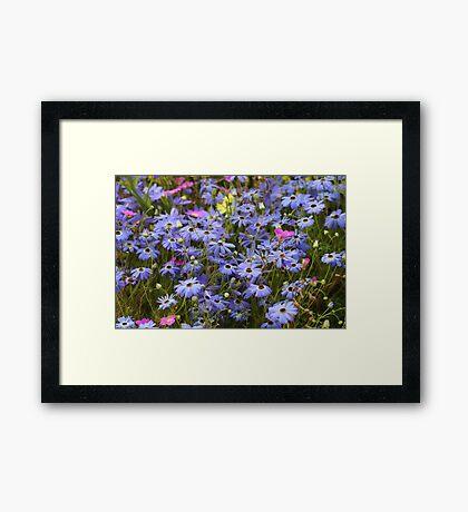 Pretty Blue Daisies Framed Print