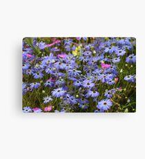 Pretty Blue Daisies Canvas Print