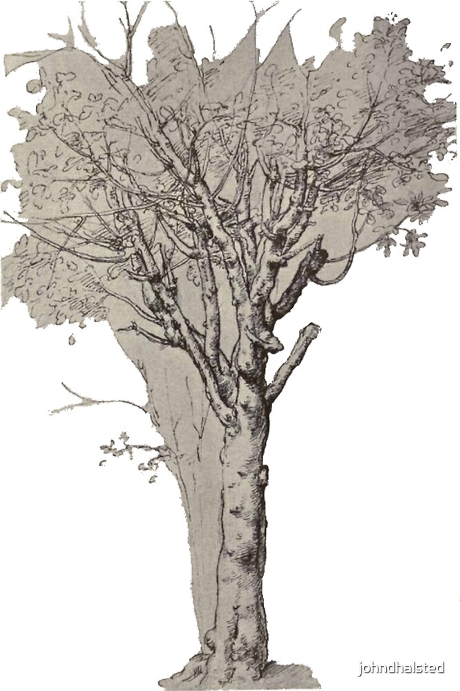 STUDY OF A TREE (WINDSOR) from the ebook THE DRAWINGS OF LEONARDO DA VINCI - 49 pen and ink sketches and studies by the Master by johndhalsted