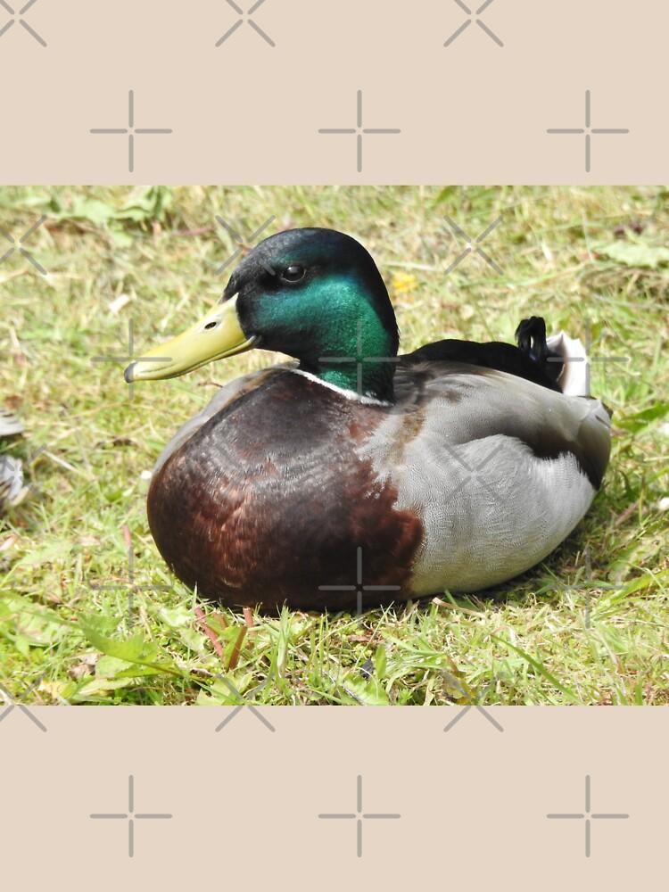 Mallard Duck by tribbledesign