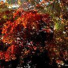 Fall Foliage for Fred by Debbie Robbins