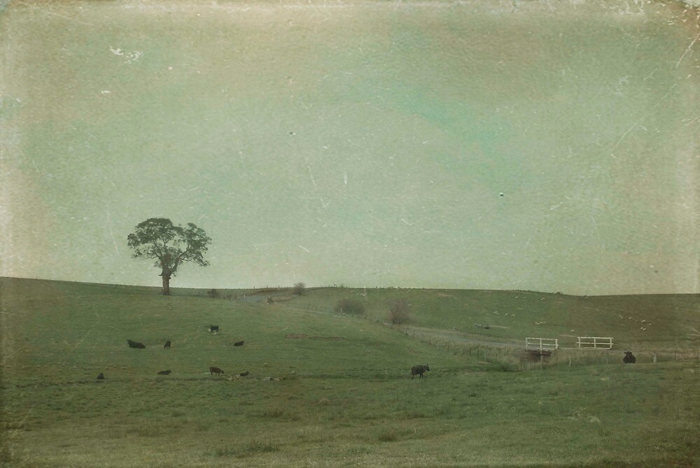 Ten Cows by garts