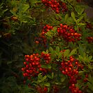 Red Berries  by JHRphotoART