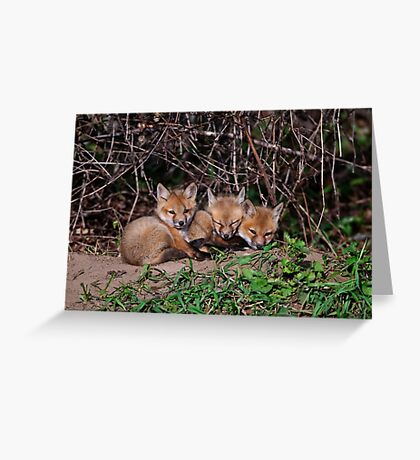 Fox Kits 8 Greeting Card
