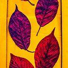 Magic Autumn ...Dance by Yukska