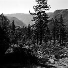 Near Hetch-Hetchy in Yosemite N.P. by Rodney Johnson