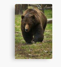 Grizzly Boar   #7914 Canvas Print