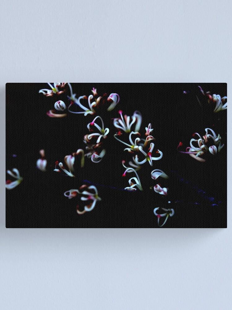 Alternate view of Hakea actites Canvas Print