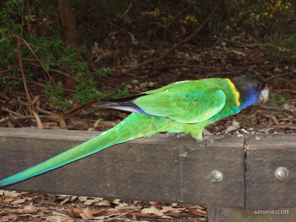 Twenty-eight Parrot by simonescott