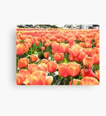 The Fairest of them All Canvas Print