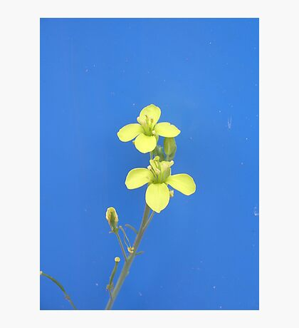 Yellow on blue background Photographic Print