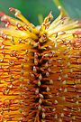 Golden Kernels by Extraordinary Light