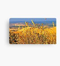 Golden grass texture like sun...... Canvas Print