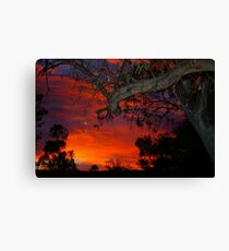 Eucalyptus in sunset Canvas Print