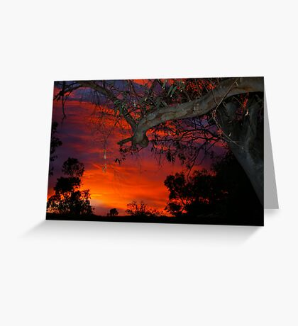 Eucalyptus in sunset Greeting Card