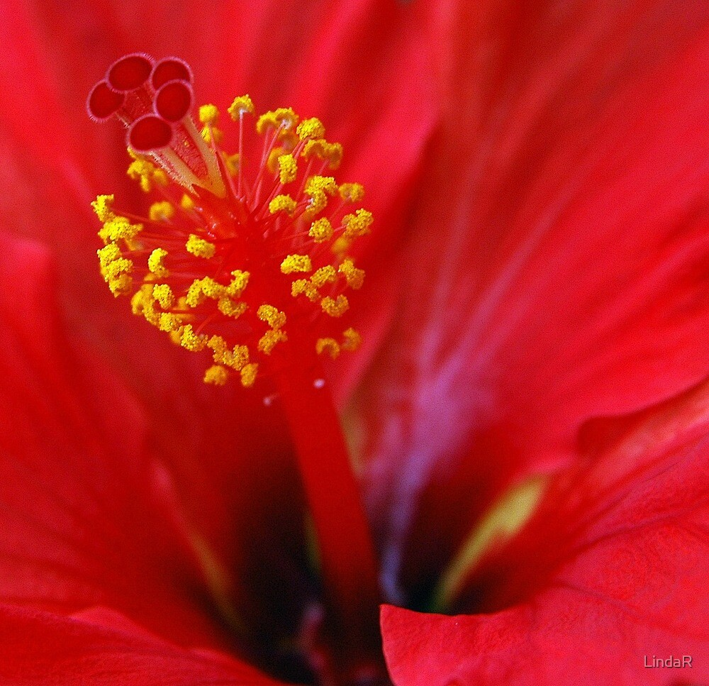 Red... by LindaR