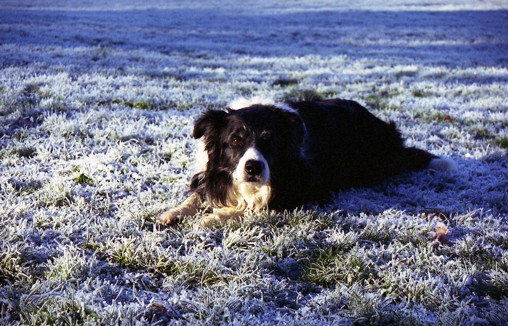 Kibo in the frost by Michael Haslam