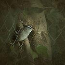 hidey hole by Jill Auville