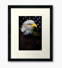 American Bald Eagle, USA Framed Print