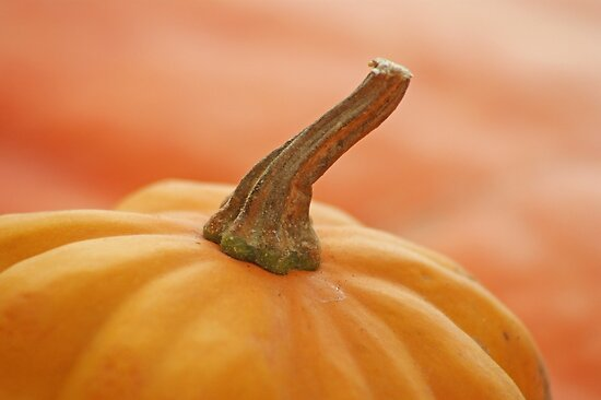 ohhhh pumpkin! by poupoune