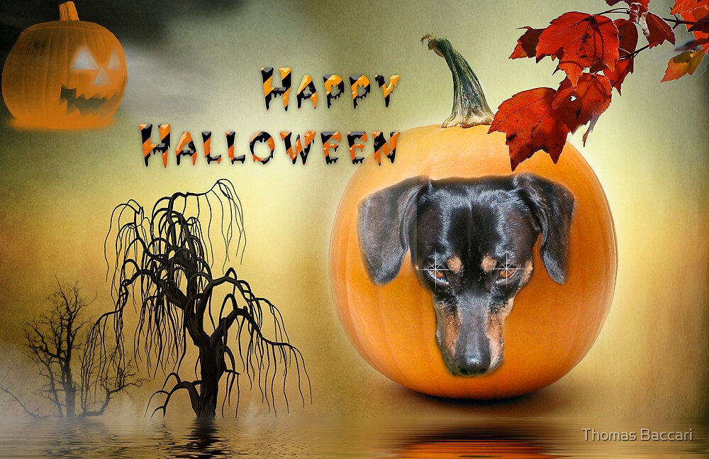 Happy Halloween from my Dachshund Jazz by TJ Baccari Photography