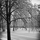 Frozen by KerrieLynnPhoto