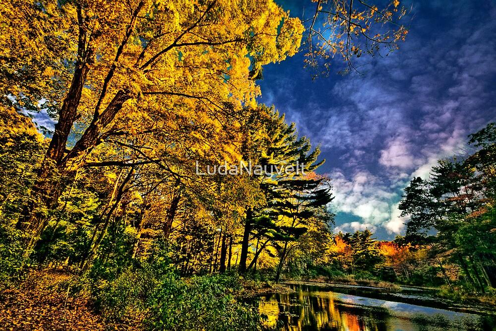 Walpole Town Forest  II by LudaNayvelt