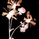 Orchids by elisabeth tainsh